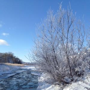 ~冬のウチの川と着氷した綺麗な枝~