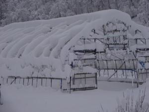 ハウスの骨組みに積もった雪