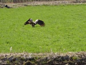 これは、、、鷹か鷲か、どっちかです!