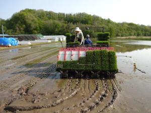 前の田植え機よりも一度に植えられる面積が 増えたため、今年は例年より1日早く田植えが 終わりました!