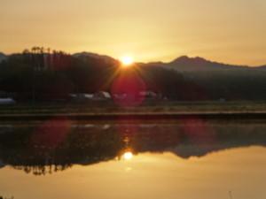 5月中旬、水田の水面に映る朝日