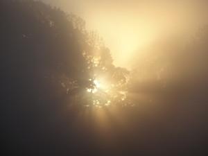 絶妙な朝霧で神々しく輝く朝日 (父の渾身の1枚!)