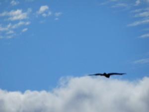 この広い空を気持ち良さそーに飛んでる鷹。 いいなぁ~。