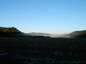 早朝に撮影。朝もやが出てました!