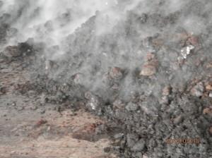 この堆肥は牛糞とオガクズを混ぜたもの。 混ぜることによりこんな風に湯気が 立ち上るほど熱が出るんです!
