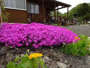 庭の花も綺麗に咲きました!