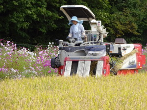 ~コンバインに乗りお米を収穫する妻~