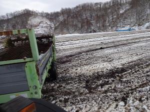 堆肥は田んぼ全体に撒きます。 寒い中の作業は大変ですが、 こうすることで翌年の土作りになるのです。