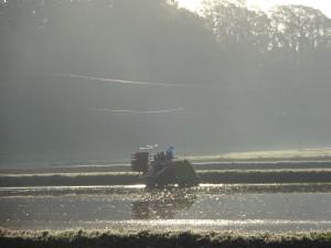 広々とした田んぼに田植え機の エンジン音が響きわたります。