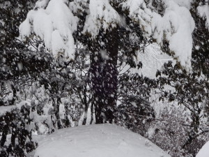 こうして見ると大量の雪が 降っているのが分かりますね~