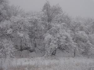雪が枝に積もり、木も山も真っ白になりました!
