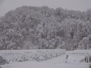 季節はずれの大雪で我家の周りは一気に冬景色に
