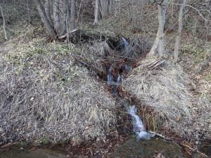 大雪が降った数日後、雪はなくなり 雪解け水の小川がたくさん出来ました!
