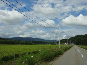 昨年は天候に恵まれ、稲はグングン 成長してくれました!