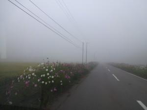 早朝は夏でも気温が下がり霧が発生します。 この寒暖の差がお米をより美味しくします。
