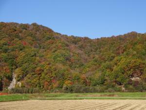 里平周辺の紅葉は、京都嵐山より スケールがデッカイ!間近で見ると 結構感動しますよ!!