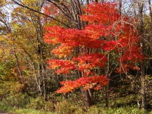 こちらは綺麗に色づいた紅葉です♪ この木の下で一人で缶コーヒーを飲むのも 結構良いものですよ~♪