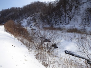 うちの川はこの通り、ほとんど雪に埋もれる。