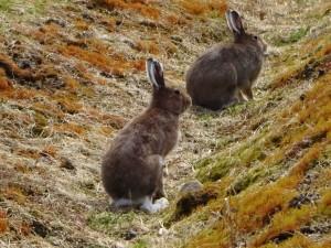 ~農園に遊びに来た可愛い野ウサギ~