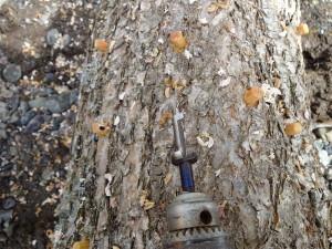 ドリルを使って原木に穴をあけて・・・