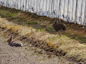 ウサギの尻尾を見て、私はさらに悶絶しました(笑)